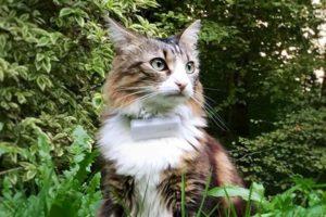 La compacité de la balise gps chat Weenect Cats est appréciable.