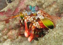 La crevette mante utilise la lumière polarisée
